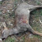 Denuncias por caza furtiva en Cudillero