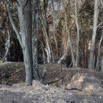 Más de 11.900 hectáreas calcinadas en el Suroccidente en octubre