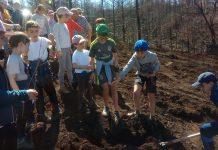 plantacion arboles colegio berducedo