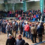 La puja de sementales alcanza los 4.500 euros en el certamen nacional de Asturiana de los Valles