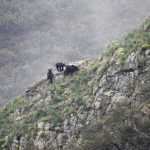 El Principado ultima la regulación sobre la observación del oso en Asturias